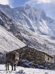 Nepal House with Yak